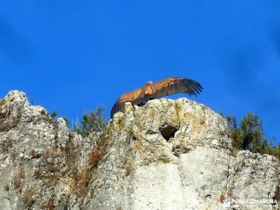 Cañones del Río Lobos y Valderrueda;cascadas del aljibe floración valle del jerte licencia monta�